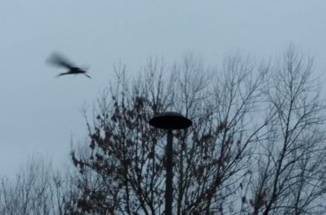 Der Erste Storch Ist Eingetroffen!