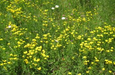 Blumenwiesen Für Klempau!