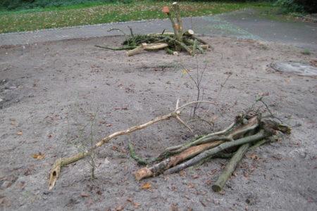 Filz-Rose und Bereifte Hechtrose hinter einem Totholzstapel