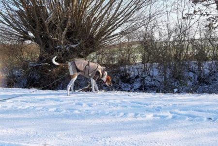 Gut eingepackt kann man durch den Schnee stöbern!