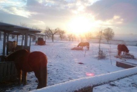 Gibt es in Klempau eigentlich mehr Pferde als Menschen? (Foto: C.O.)