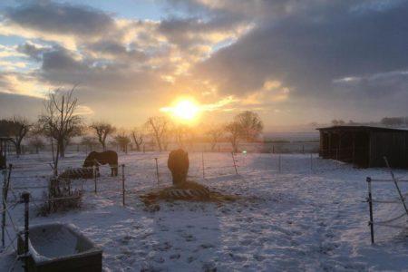Abendbrot für die Pferde im Schnee (Foto: C.O.)