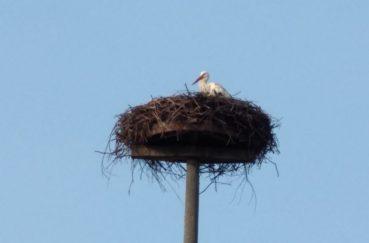 Der Storch Auf Dem Dorfnest