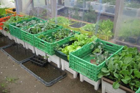 Diverse Salat- und Kohlpflanzen